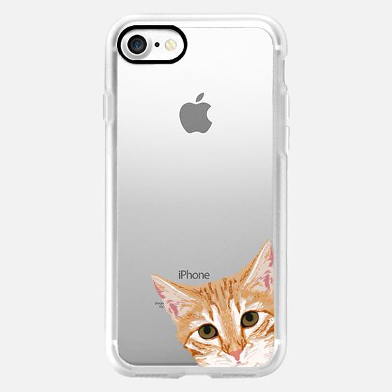 caramel kitten videos