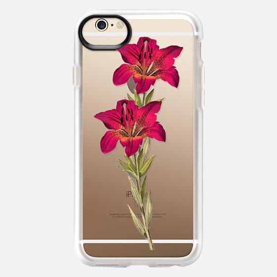 iPhone 6 Case - Vintage magenta orange green colorful lily floral