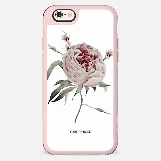 garden rose - white